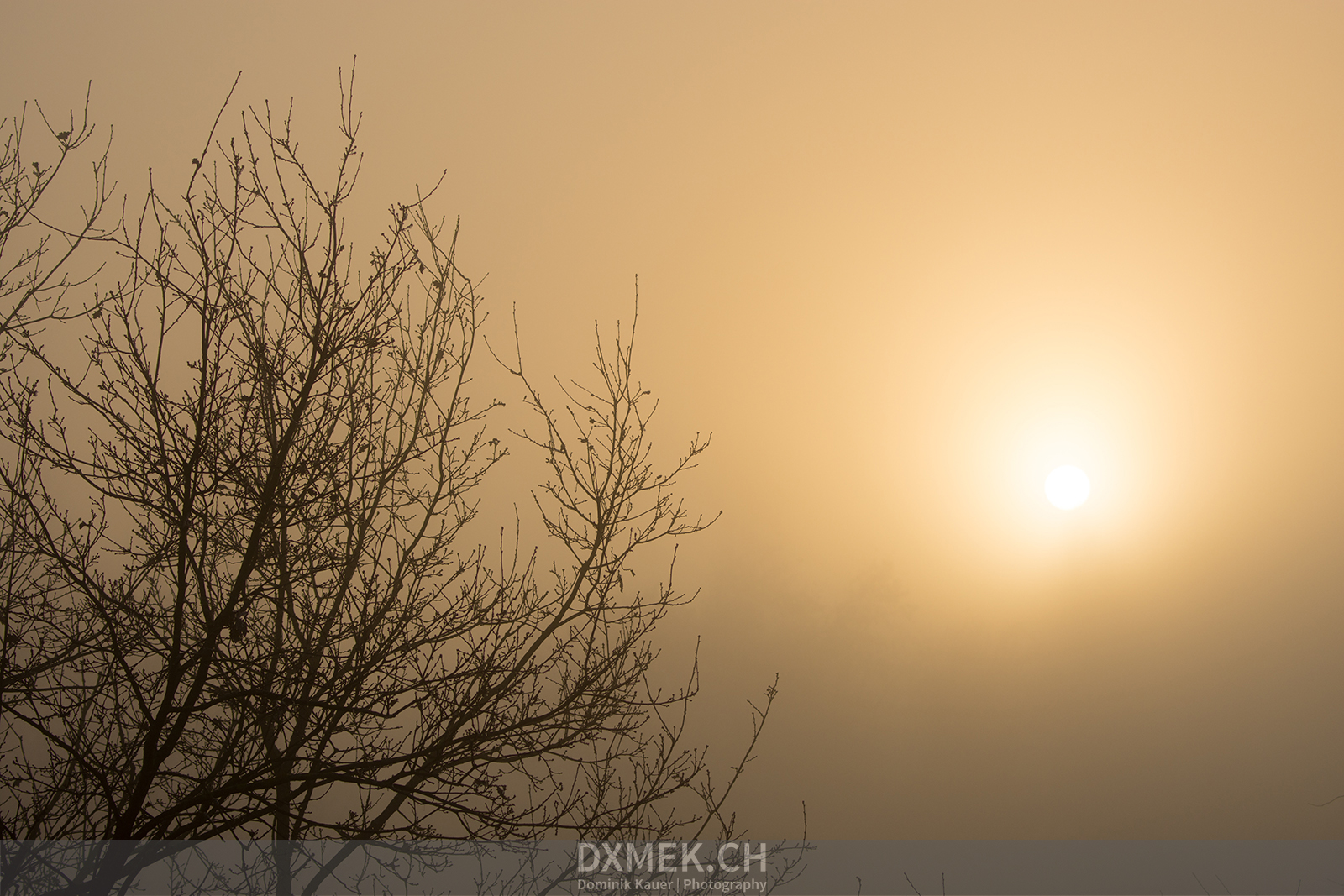 Foggy Winter Sunset